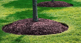 Fall & Winter Fertilization and Tree Pruning